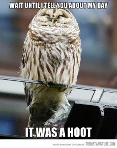 funny-owl-day-hoot