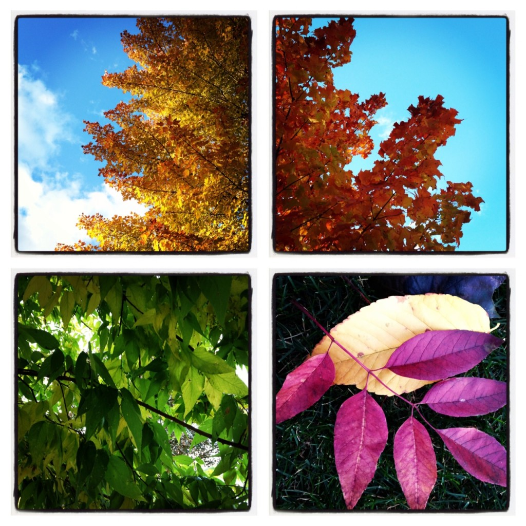 Fall Colors (c) Kristen Dembroski