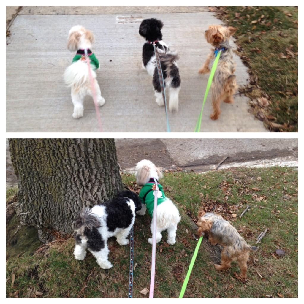 3 Pups (c) Kristen Dembroski