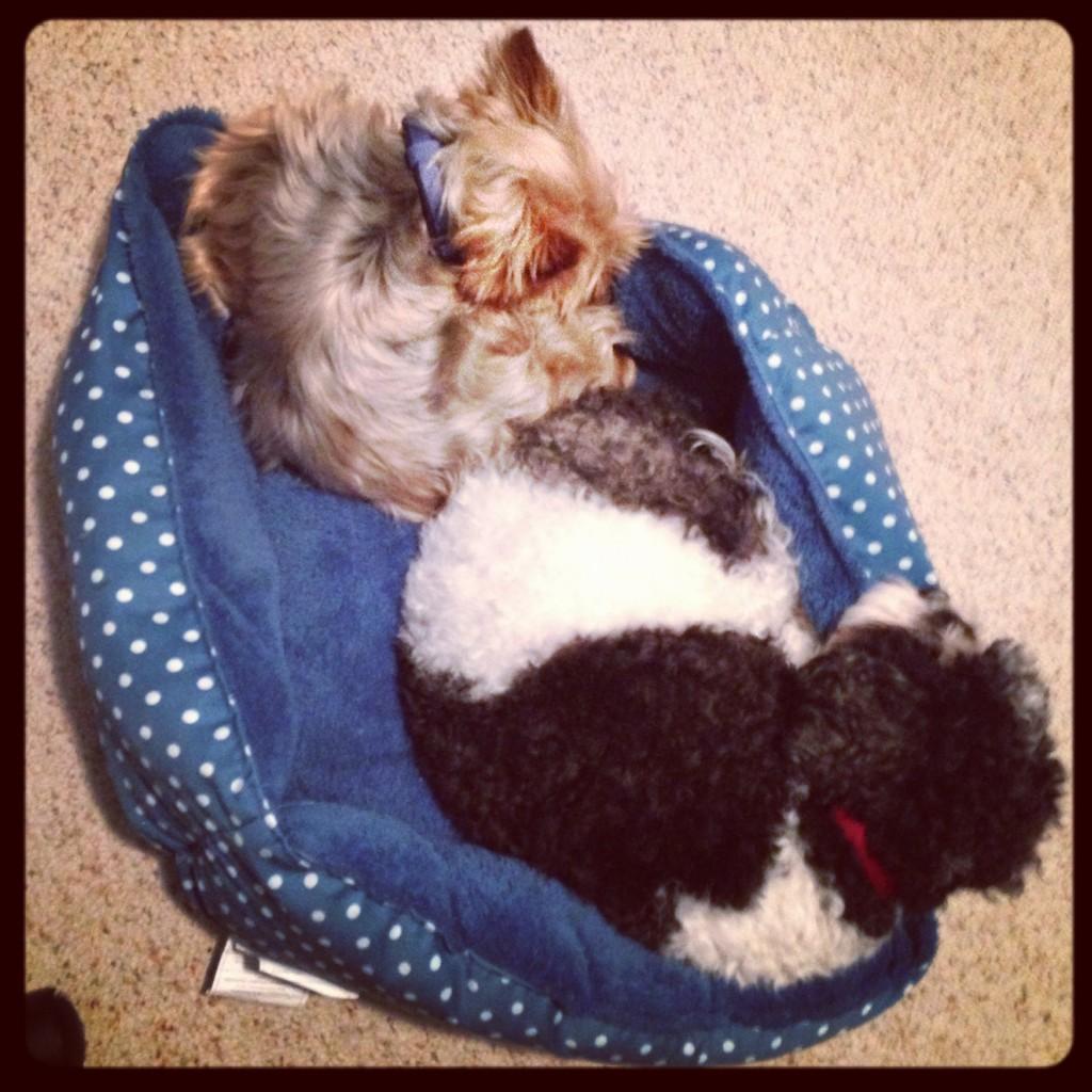 Snuggling Puppies (c) Kristen Dembroski