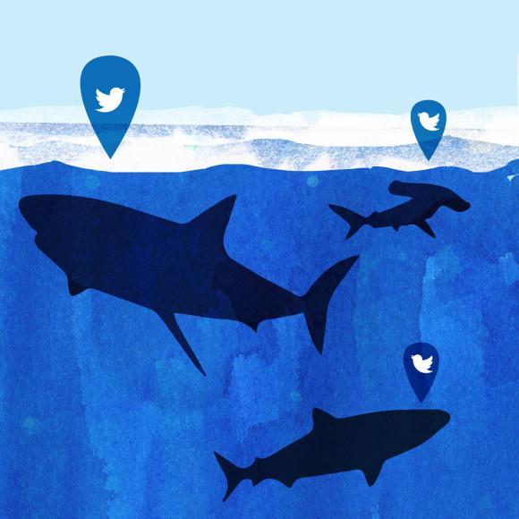 Tweeting Sharks