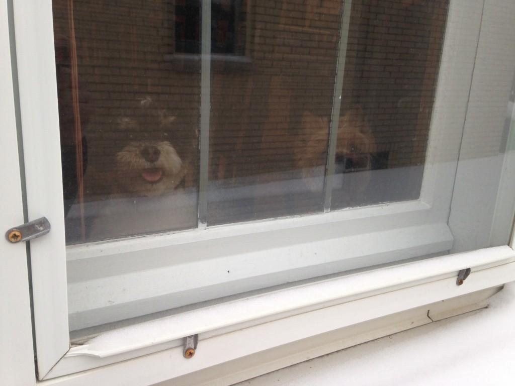 I'm Being Watched (c) Kristen Dembroski