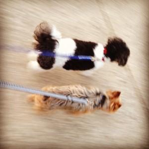 Dogs (c) Kristen Dembroski