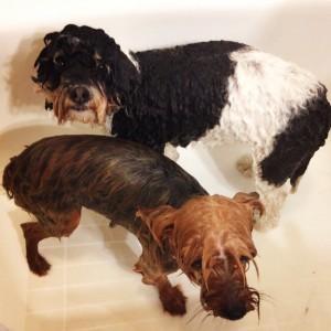 Doggy Bath (c) Kristen Dembroski