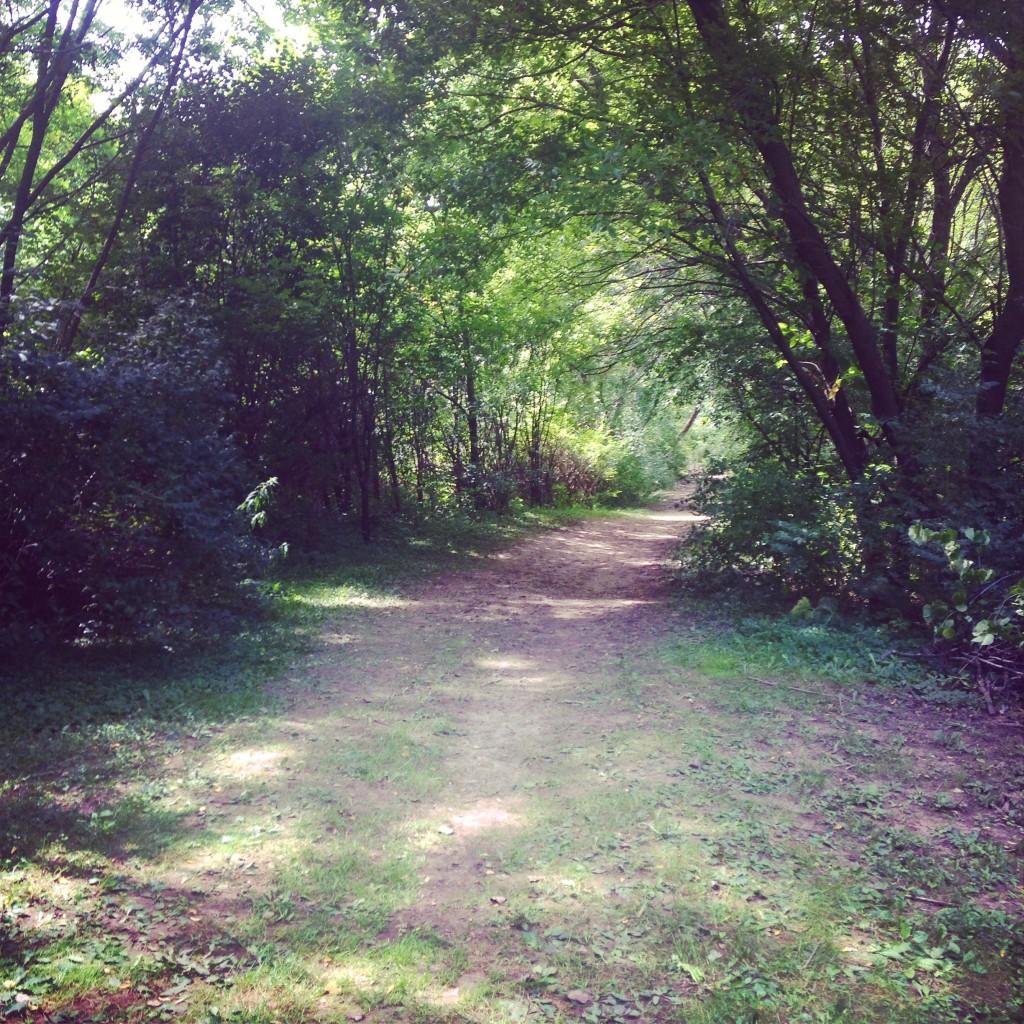 School Forest (c) Kristen Dembroski